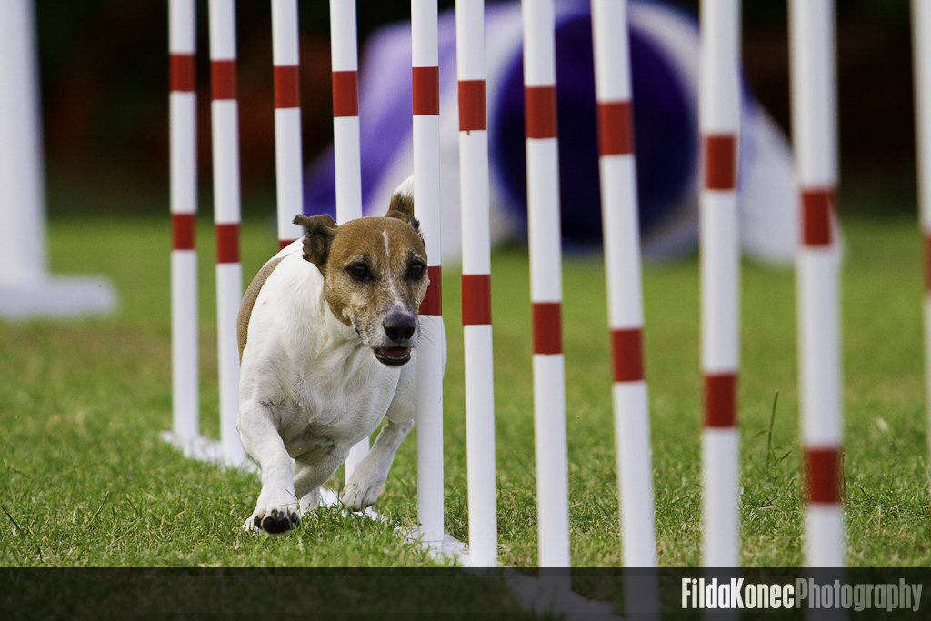 Running the agility course